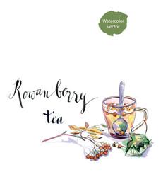 Cup rowanberry tea vector
