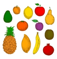 Freshly harvested fruits retro sketch icons vector image
