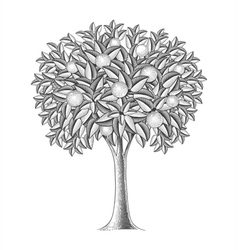 Fruit tree in engraving style vector image