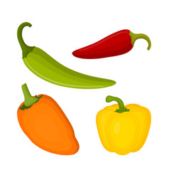 Set with different types of peppers vector