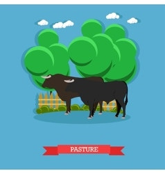 Concept poster beef farm grazing cattle vector