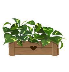 Golden pothos plant vector