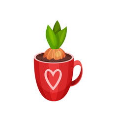 sprouted hyacinth bulb in bright red cup with vector image