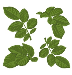 set of beautiful green leaves isolated on white vector image vector image