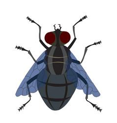 A housefly vector