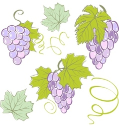 creative grapes set elements vector illustration vector image