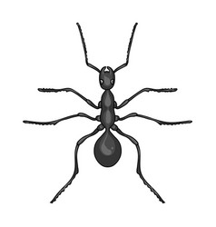 Insect ant single icon in monochrome style for vector
