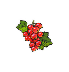 Red currant ripe berries icon vector
