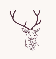beautiful drawing or sketch head male deer vector image