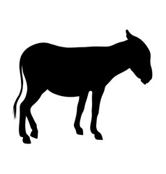 black silhouette of donkey on white background of vector image