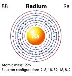 Diagram representation of the element radium vector image vector image