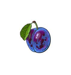 Plum hand drawn ripe berries bunch vector