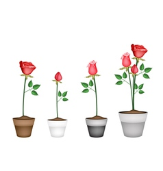 Set of Red Roses in Ceramic Flower Pots vector image