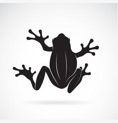frog design on white background amphibian vector image