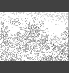 sea urchin fish and crab vector image
