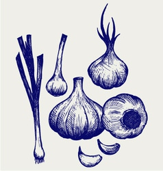 Heads of garlic vector image vector image