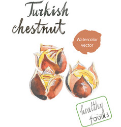 watercolor roasted chestnuts vector image