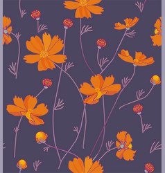 orange cosmos flowers vector image