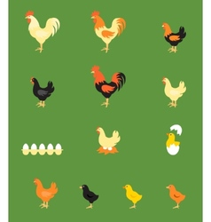 Rooster Hen Chick vector
