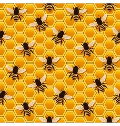 bee honeycomb pattern vector image vector image