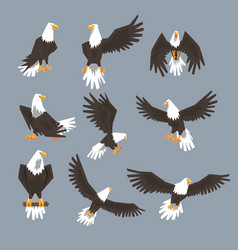 bald eagle image set on grey background vector image