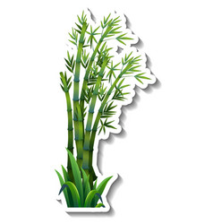 Bamboo tree sticker on white background vector