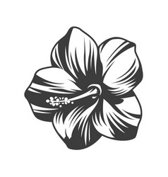 beautiful blooming hibiscus flower vector image