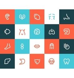 Human anatomy icons Flat style vector image