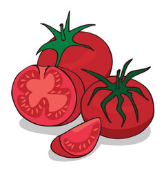 Isolate ripe tomato vegetable vector