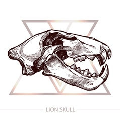 Lion Skull Hand Drawn vector image