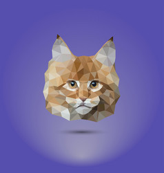 Low-poly cat the head of a mane coone suitable vector