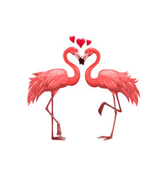 pink flamingos birds in love vector image
