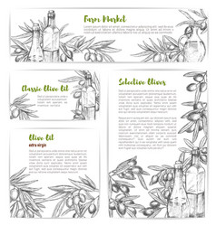 olive oil market sketch banners or posters vector image