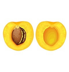 two halves of apricot with seed vector image