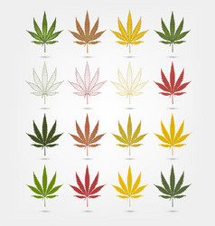Big set of realistic marijuana leaf cannabis vector