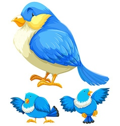 Blue bird in three different actions vector image