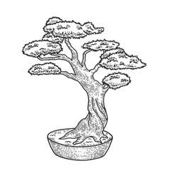 Bonsai tree sketch engraving vector