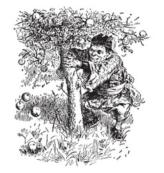 Dwarf apple tree vintage vector