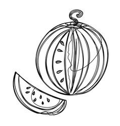 fruits exotic fruits vegetarian - minimal vector image