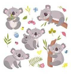 Koala bear australia animal baby hugging mom vector