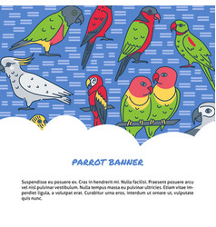 Parrots background in line style with text vector