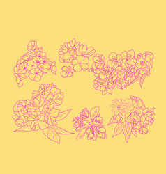 set sketch line art of cherry blossom flowers and vector image