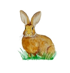 Watercolor bunny on the meadow vector image