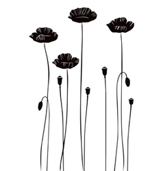 Poppy silhouettes vector image