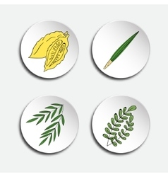 Four species for Jewish Holiday Sukkot vector image