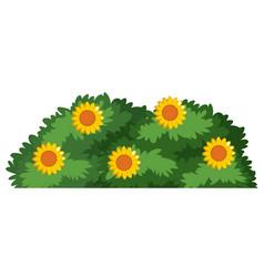 an isolated flower bush vector image