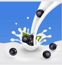 Black currant dropping in milky splash vector