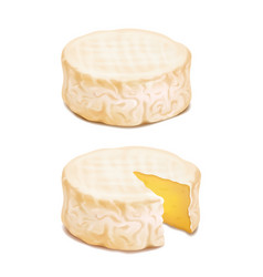camembert or brie cheese block realistic vector image