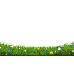 Green grass border with flowers isolated vector