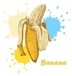 hand draw banana vector image